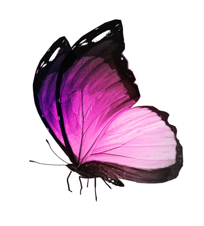 Pink butterfly on white background photo