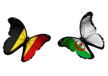 Concept - two butterflies with Belgium and Algeria flags flying, like two football teams playing photo
