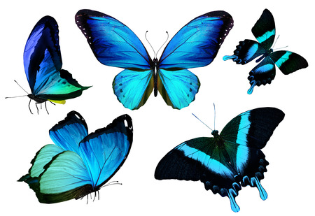 morpho: Many different butterflies, isolated on white background Stock Photo