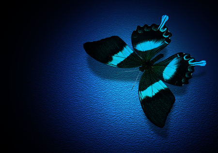 Turquoise butterfly on dark blue background photo