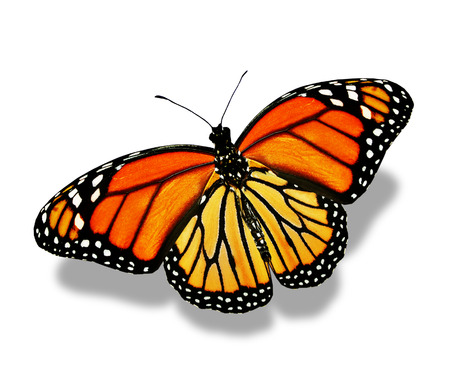 white butterfly: Orange butterfly , isolated on white
