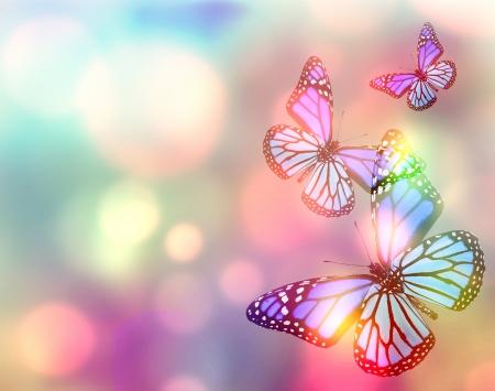 Fondo natural de luz con la mariposa