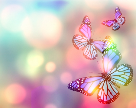 color backgrounds: Light natural background with butterfly Stock Photo