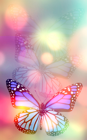 Light natural background with butterfly photo