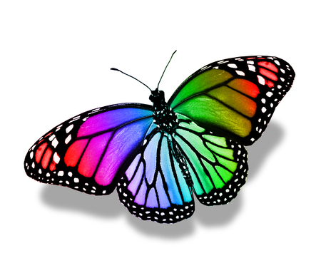 colorful butterfly: Colorful butterfly , isolated on white