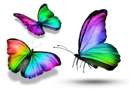 colorful butterfly: Three colorful butterflies , isolated on white Stock Photo