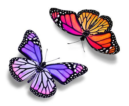 mariposas volando: Dos mariposas de color, aislado en blanco