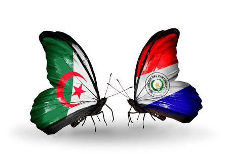algerian flag: Two butterflies with flags on wings as symbol of relations Algeria and Paraguay