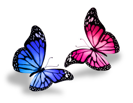 Pink and blue butterfly, isolated on white photo