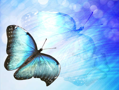 boke: Sunshine with butterfly as abstract lights background