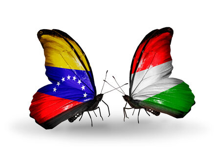 Two butterflies with flags on wings as symbol of relations Venezuela and  Hungary photo