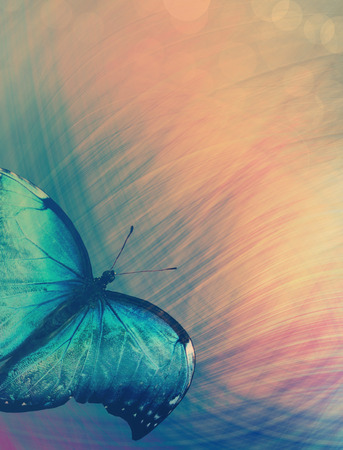 Sunshine with butterfly as abstract lights background photo