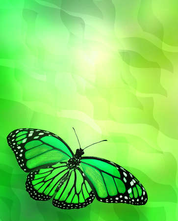 Butterfly on abstract lights background photo