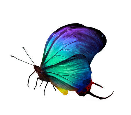 Colorful butterfly , isolated on white photo