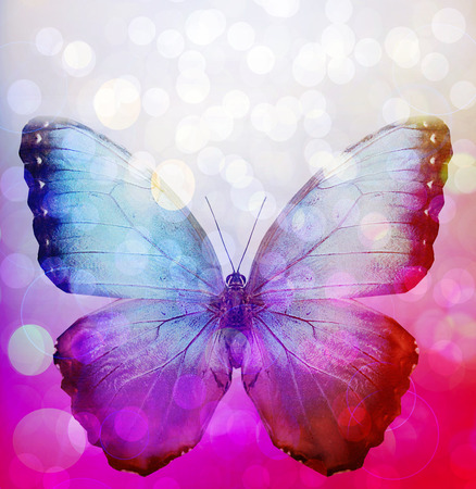 Multicolour background with butterfly, like abstract sunshine photo