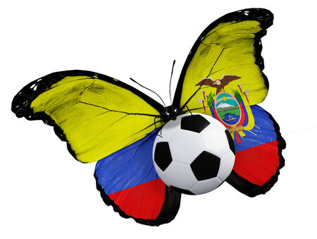 ball like: Concept - butterfly with Ecuador flag flying near the ball, like football team playing
