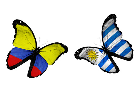 Concept - two butterflies with Columbia and Uruguay flags flying, like two football teams playing photo