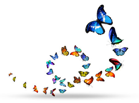 Loop of many different butterflies photo