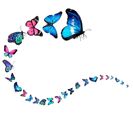 Wavy line of butterflies photo