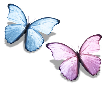 pink butterfly: Two blue pink butterfly, isolated on white