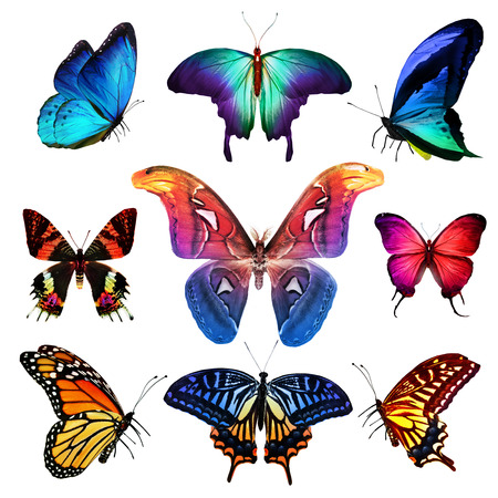 blue violet bright: Many different butterflies, isolated on white background Stock Photo