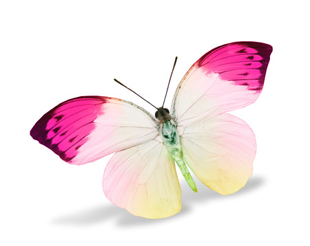 color butterfly: Color butterfly , isolated on white