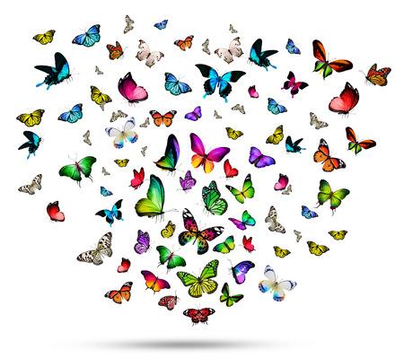 흰색 배경에 격리 된 많은 다른 나비, 스톡 콘텐츠