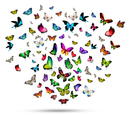 Many different butterflies, isolated on white background Foto de archivo