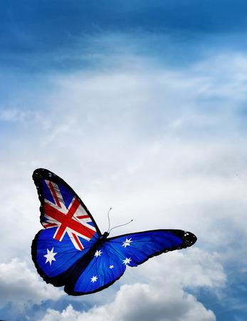 Australia flag butterfly flying on sky background