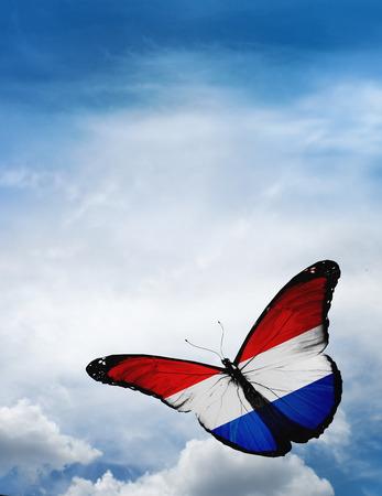 drapeau hollande: Hollande drapeau papillon volant sur fond de ciel Banque d'images