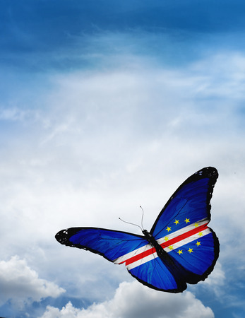 butterfly flying: Cape Verde flag butterfly flying on sky background Stock Photo