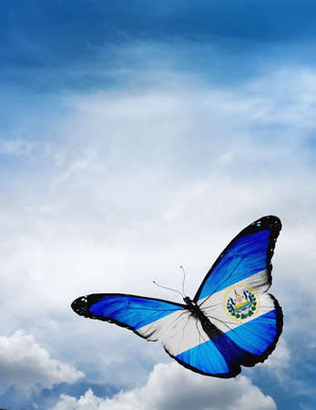 butterfly flying: Salvador flag butterfly flying on sky background
