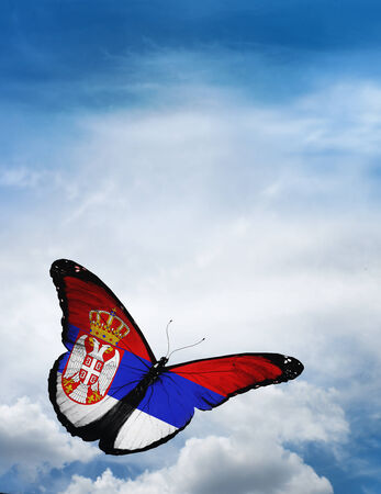 butterfly flying: Serbia flag butterfly flying on sky background Stock Photo