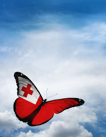 butterfly flying: Tonga flag butterfly flying on sky background Stock Photo