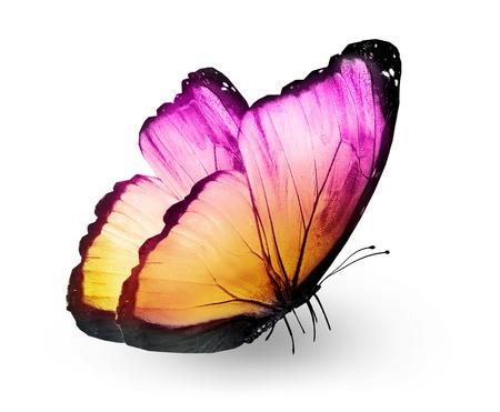 Kleur vlinder, geïsoleerd op wit