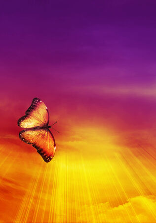 Beautiful sky with butterfly background photo