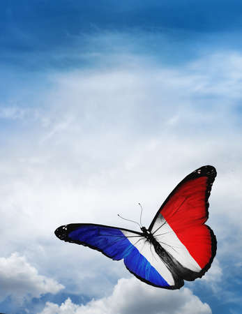 butterfly flying: France flag butterfly flying on sky background Stock Photo