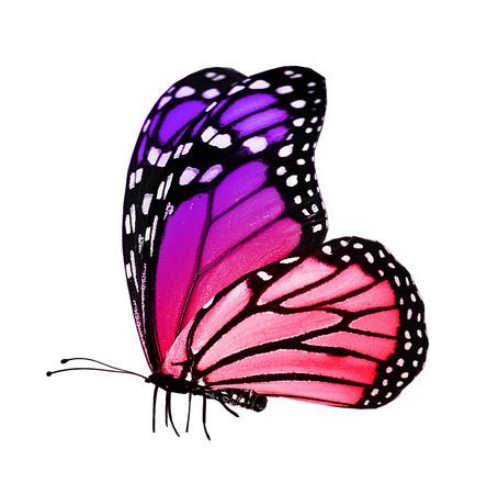 papillon rose: Couleur papillon, isolé sur blanc