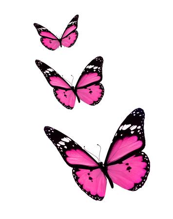 papillon rose: Trois papillons, isolé sur blanc Banque d'images