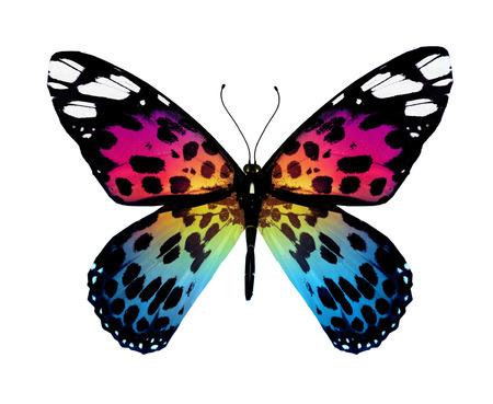 Colore farfalla, isolato su bianco Archivio Fotografico