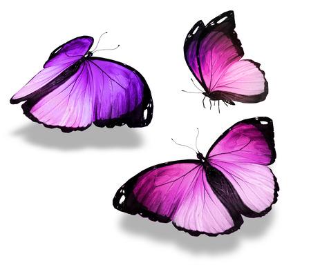 butterfly flying: Flock of butterflies Stock Photo