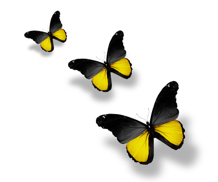 Three Baden  flag butterflies, isolated on white photo