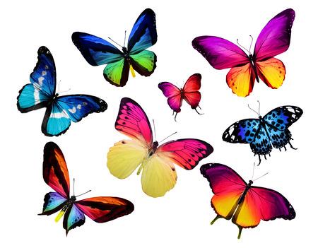mariposas amarillas: Muchas mariposas diferentes, aislados en fondo blanco