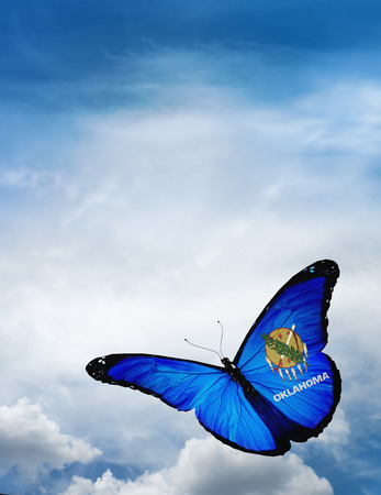 american butterflies: Oklahoma flag butterfly flying on sky background