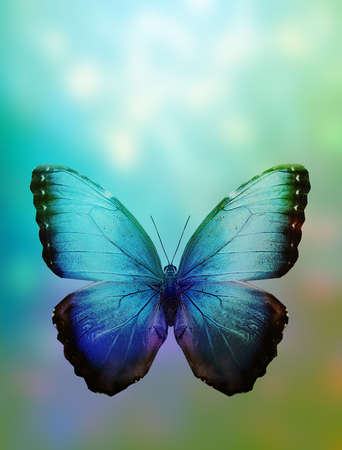 Colored abstract background with butterfly photo