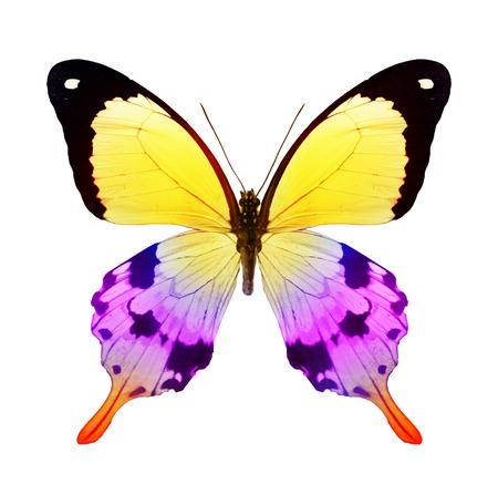 papillon rose: Couleur papillon, isol� sur blanc