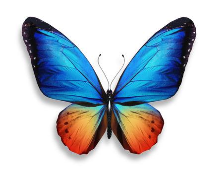 butterflies flying: Color de la mariposa, aislado sobre fondo blanco