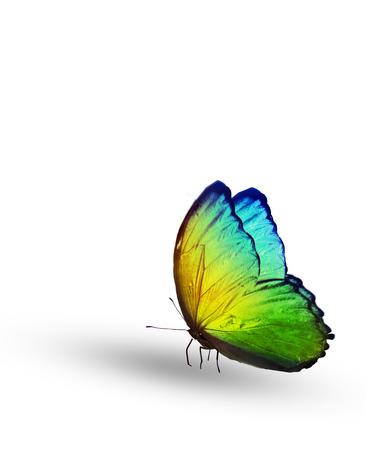 色の蝶は、白で隔離