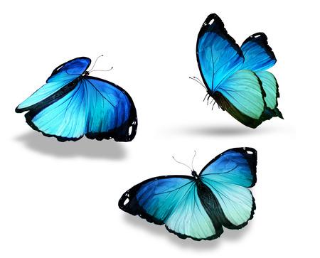3 つの青い蝶「モルフォ」白で隔離