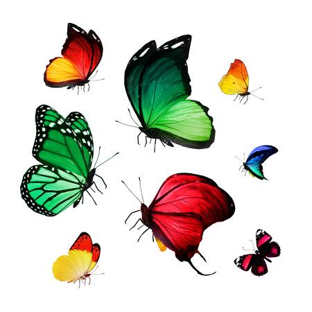 Flock of butterflies photo